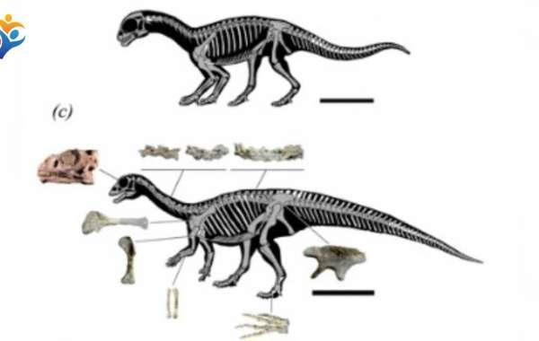 Encuentran dinosaurio qué pasaba de cuatro a dos patas mientras crecía