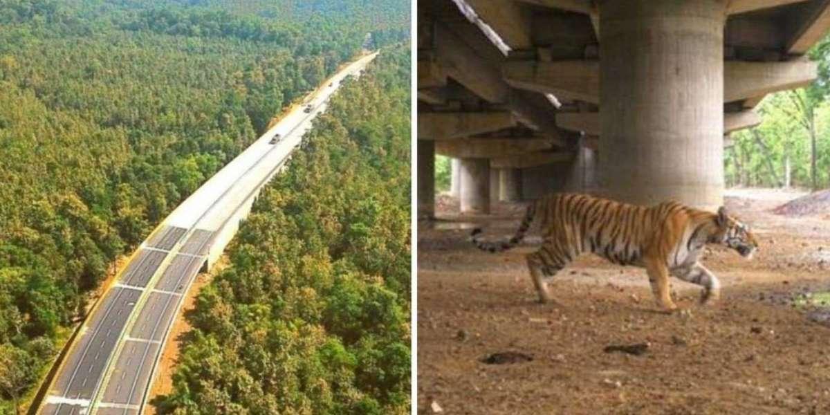 India creó tramos de autopista elevada para proteger el paso de tigres del parque nacional