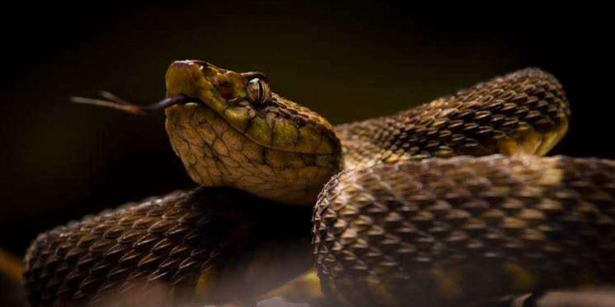 El veneno de serpiente se muestra prometedor como pegamento para la piel para cerrar heridas potencialmente mortales