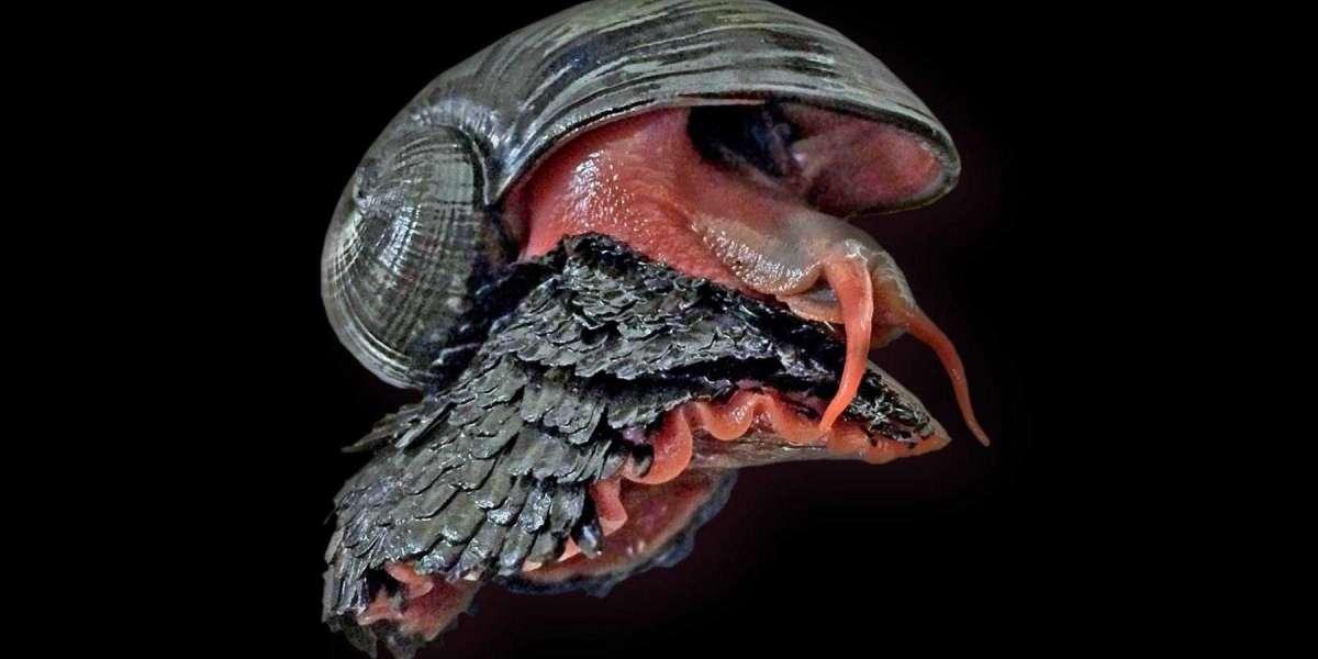 El caracol de patas escamosas es un animal asombroso vive a 2700 metros de profundidad